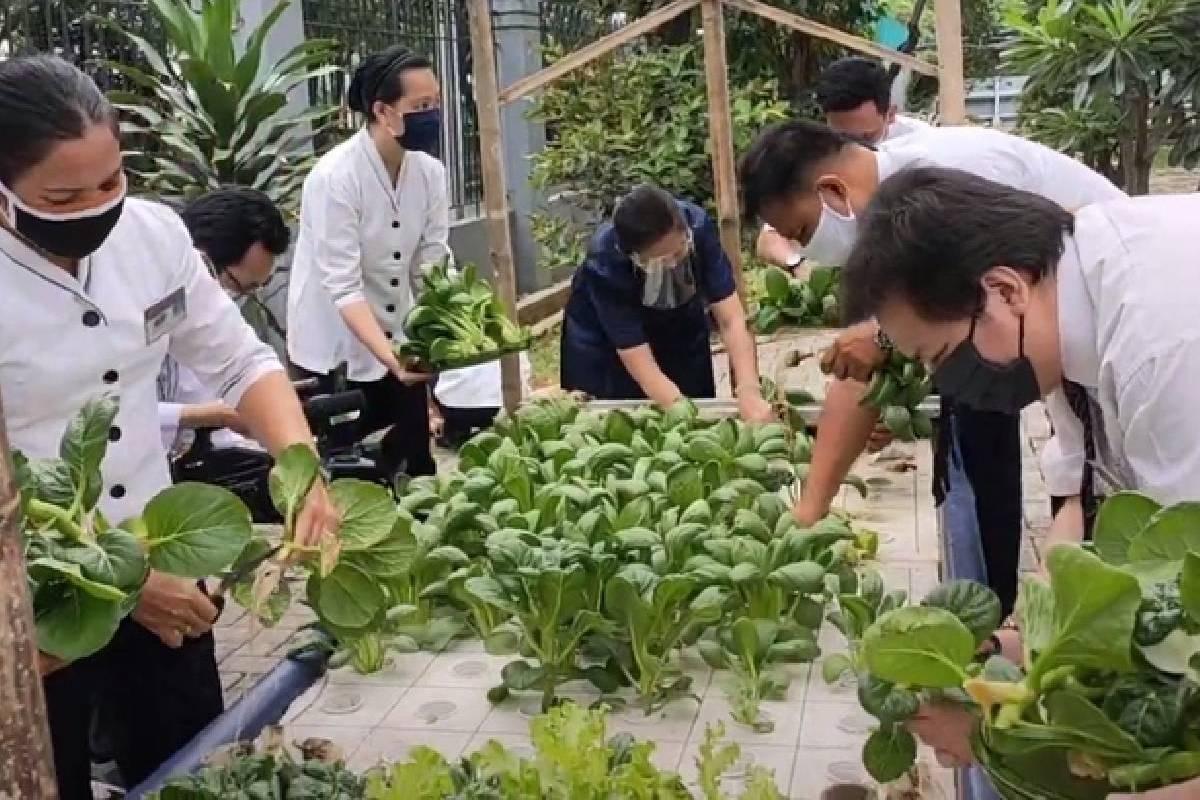 Memanen Sayuran Hidroponik Di Sekolah Cinta Kasih Tzu Chi