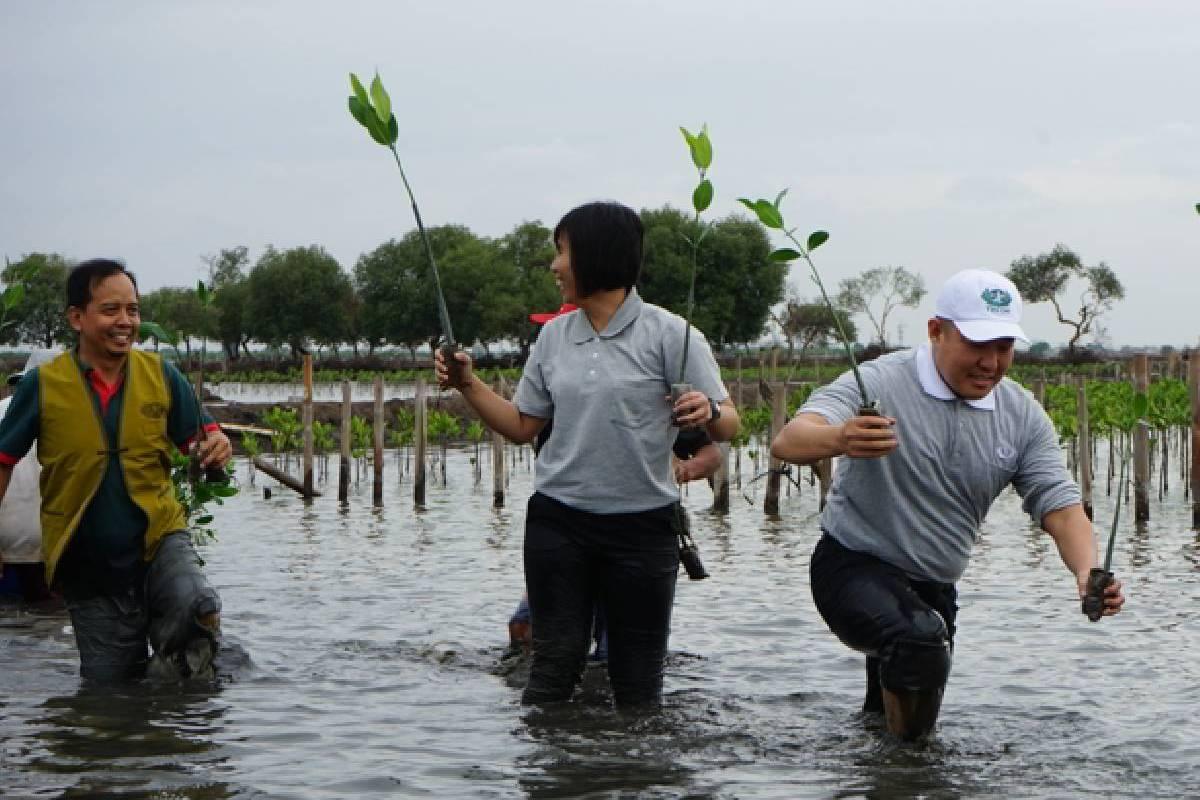 Menanam Mangrove, Menyayangi Bumi