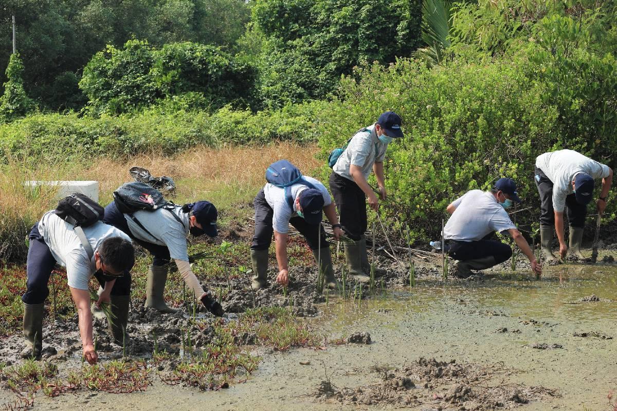 Serunya Menanam Mangrove di Hari Lingkungan Hidup Sedunia