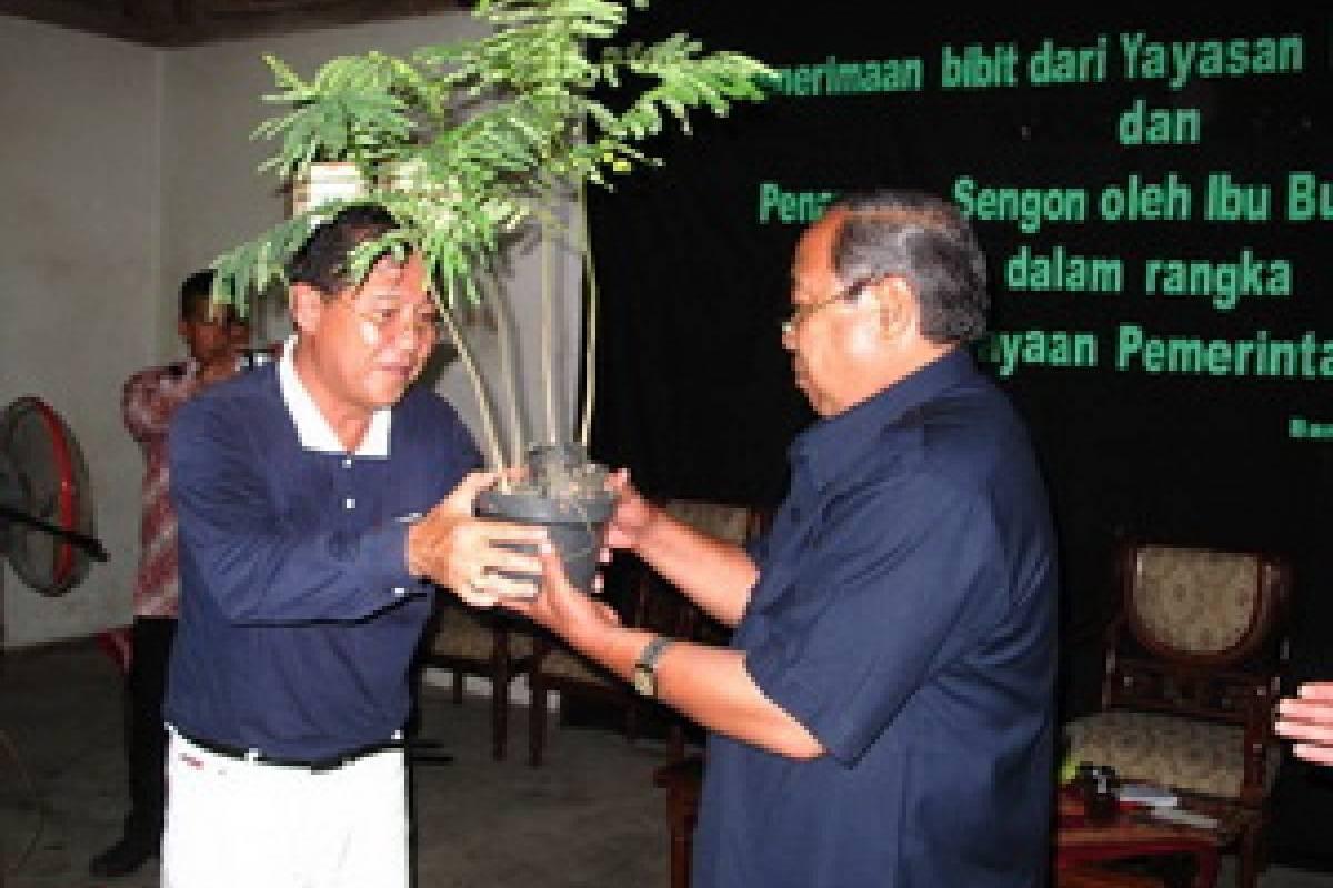 Pohon Sengon untuk Bantul